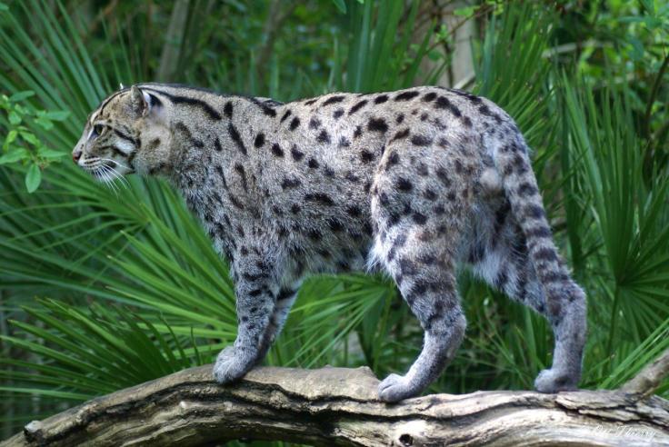 chat-pecheur-lf2