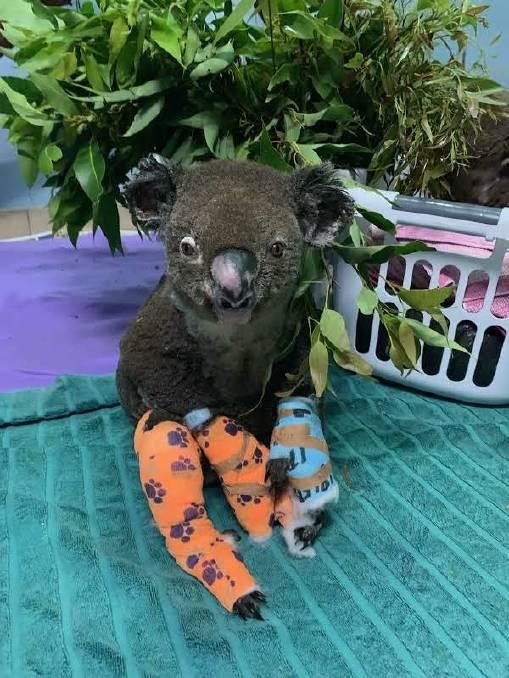 Peter the Koala